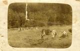 Senoseč na louce za Mašičkovým mlýnem (zač. 20.století)