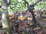 léto-houbařeni ve Skryjích