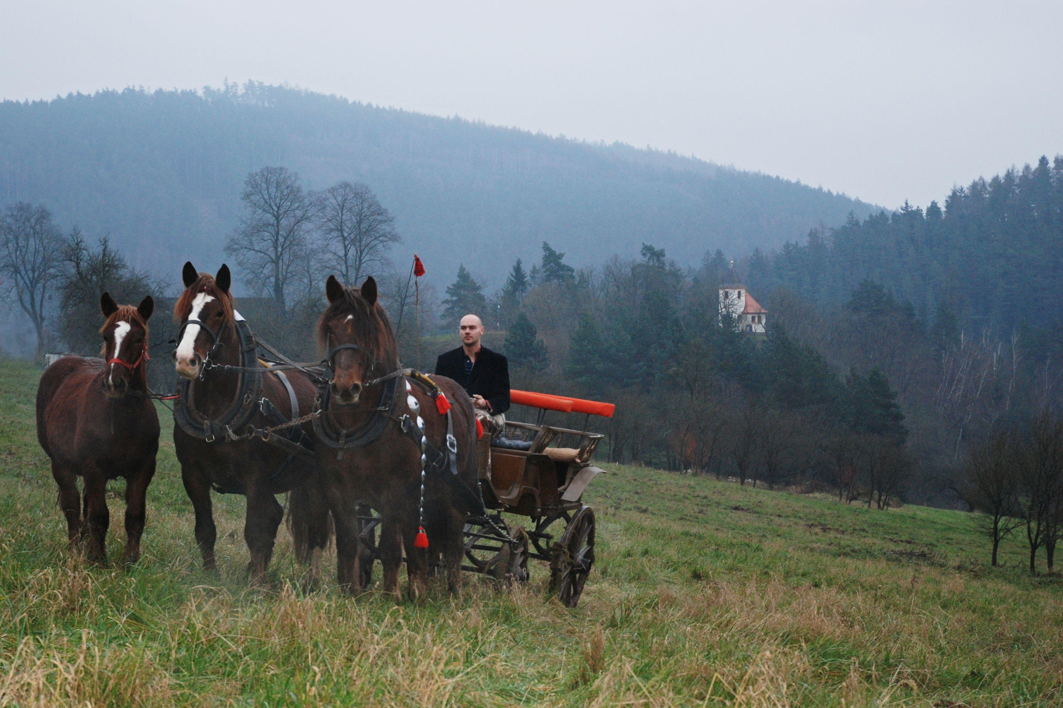 Koně se vrátili na Hrádek