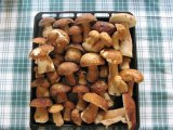 léto- houbaření ve Skryjích