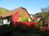 podzim- Skryje 2011